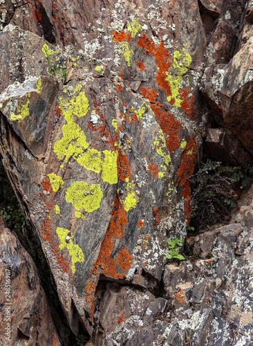 Jackson Pollock Lichen Canvas Print