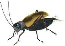 Field Cricket Vector Illustrat...