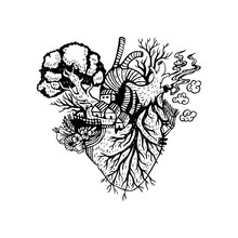 Illustration Anatomical Heart ...