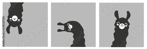 Set of cartoon pictures, images, photography with llama in black color. Gray background. Vector illustration. Flat design.