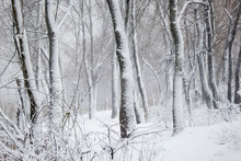 Forest In The Snow For Text
