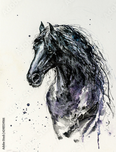 Fototapeta Decorative portrait of beautiful Friesian horse with long mane in black color on white background.Picture created with watercolors. obraz