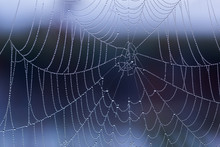 Spider Web With Dew Drops Without Spider At Morning With Selective Focus Closeup