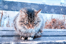 A Street Tricolor Cat Sits On A Bench In The Winter, In The Park Near The River. A Miserable Look Of An Homeless Animal  Animal In City.