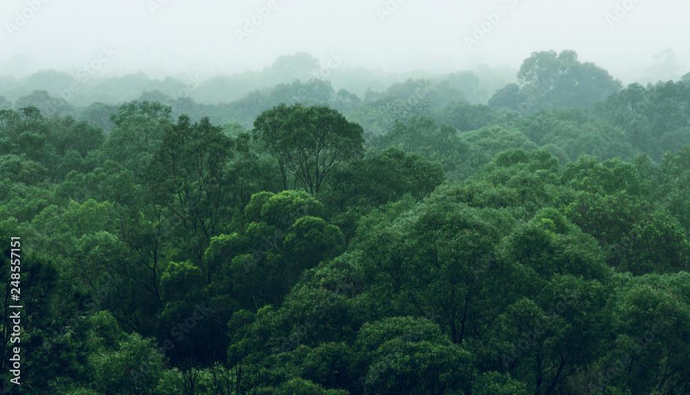 Fototapeta Rainforest jungle aerial view