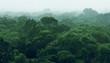 Leinwanddruck Bild - Rainforest jungle aerial view