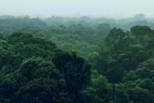 Rainforest Jungle Aerial View