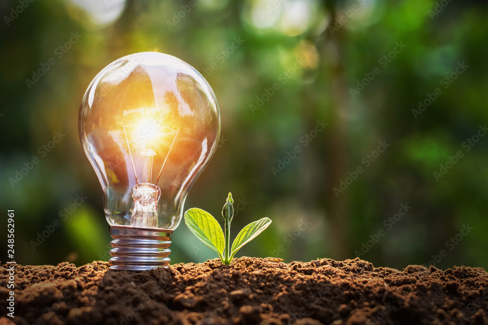 Fototapety, obrazy: lightbulb with small plant on soil and sunshine. concept saving energy in nature