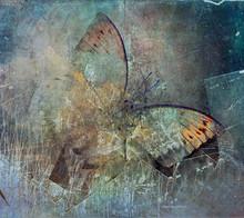 A Grunge Butterfly Design Wallpaper