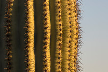 Up-Close Shot Of A Saguaro Cac...
