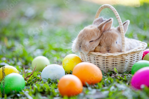 Cute little bunny sleeping in the basket and easter eggs in the meadow Fototapete