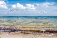 Seaweed In Caribbean Beach Sea...