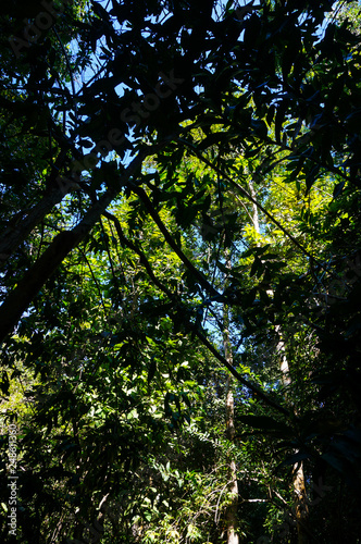 Garden Poster Spring branches trees in green forest