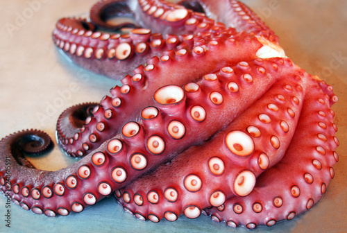 Fotografie, Obraz  Fresh octopus at Valencian market. Spain