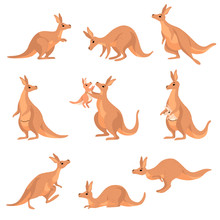 Cute Brown Kangaroo Set, Wallaby Australian Animal Character In Different Poses Vector Illustration