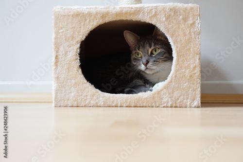 grey tabby cat resting in hideaway cat bed Wallpaper Mural