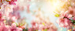 canvas print picture Panoramic spring background with beautiful pink cherry blossoms, bokeh background and lots of warm dreamy sunlight
