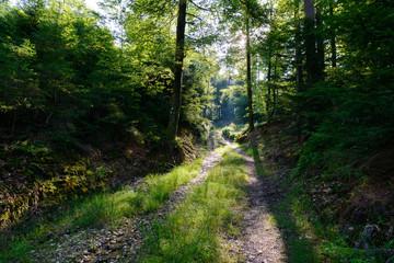 Świerkowy Las, Austria