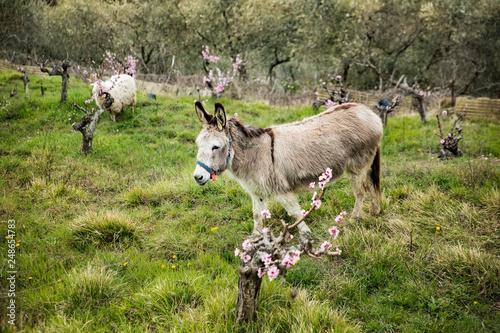 Fotografie, Obraz Green Italian slopes and fields