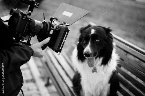Fotografia, Obraz Dog being recorded by a filmmaker