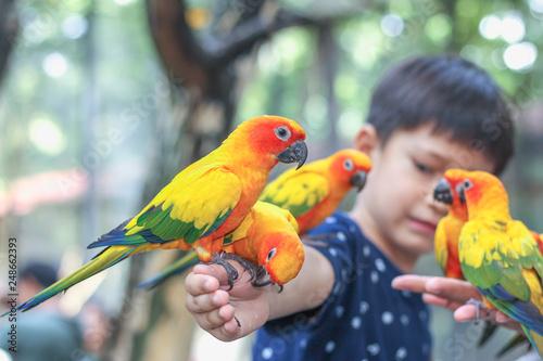 Sun conure parrots on hand. Wallpaper Mural