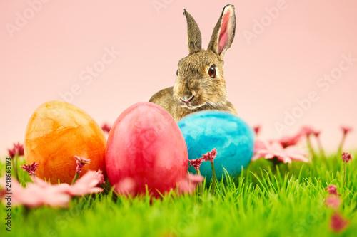 Plakat Easter bunny i pisanki na Wielkanoc na łące