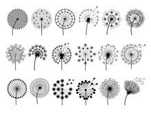 Dandelion Silhouettes. Herbal ...