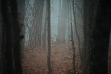 Roe Deer In A Foggy Forest