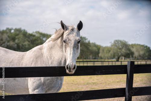 Horse looking at you