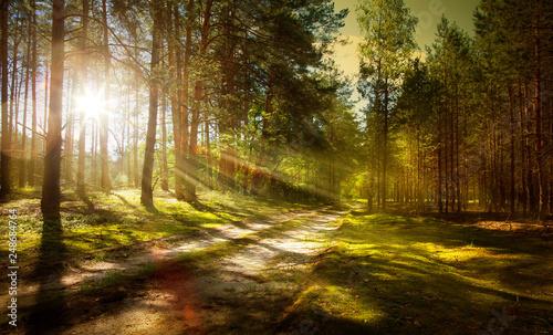 szlak w sosnowym lesie