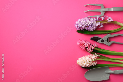 Garden pruner, rake, with flowers on pink punchy pastel background. Banner with copy space. Spring, summer or garden concept. Creative layout. Top view, flat lay - 248685323