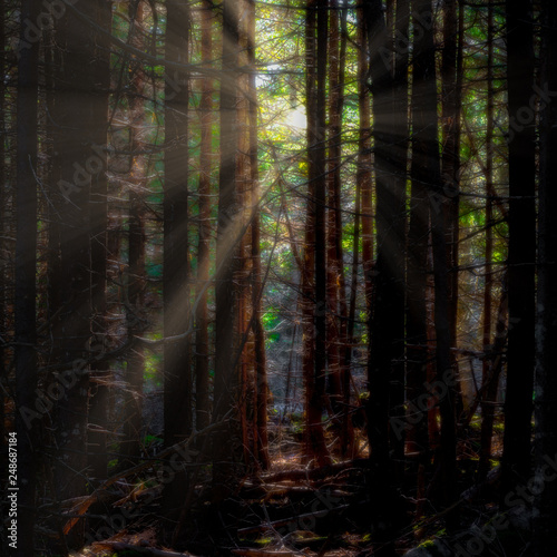 Acadia Maine Woods Forest
