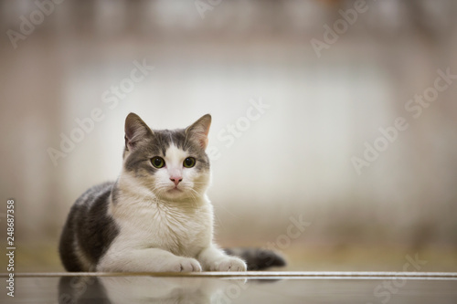 Foto op Aluminium Kat Portrait of nice white and gray domestic cat with big round green eyes laying relaxed outdoors on blurred light sunny copy space background. Animal world concept.