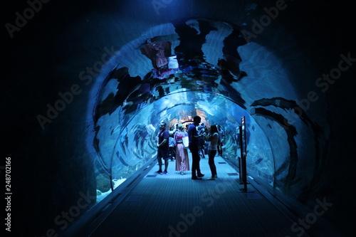 Obraz na dibondzie (fotoboard) Akwarium Dubaju