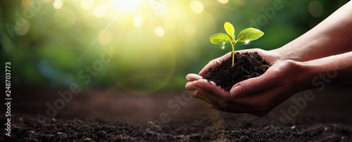 In de dag Natuur Plant in Hands. Ecology concept. Nature Background