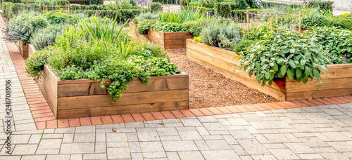 Fotografia Raided beds in an urban garden growing plants herbs spices and vegetables
