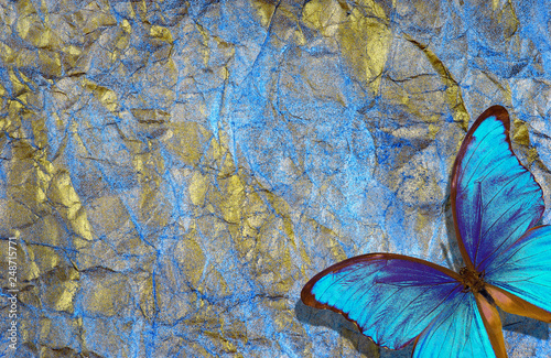 Garden Poster Butterflies in Grunge morpho butterfly on bright shining background. gold blue texture background. golden crumpled paper.
