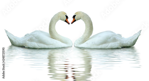 Papiers peints Cygne image of swans on the water closeup