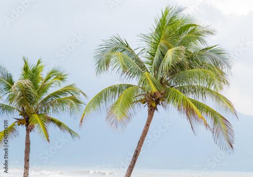 Fotografia, Obraz  Coconut palm trees Beach, DaNang, Vietnam