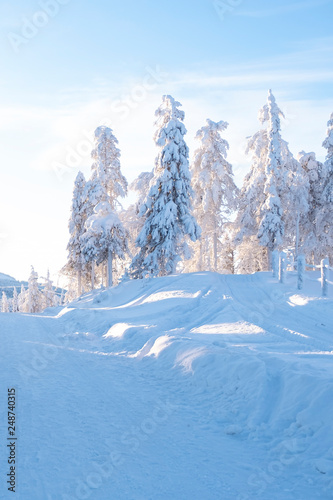 Fotobehang Bergen Ruka Lapland Finland. The sun's rays pass through the snow-covered trees. Winter landscape in the morning.