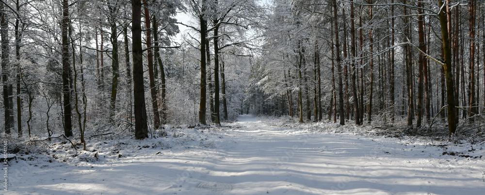Fototapeta las zimą