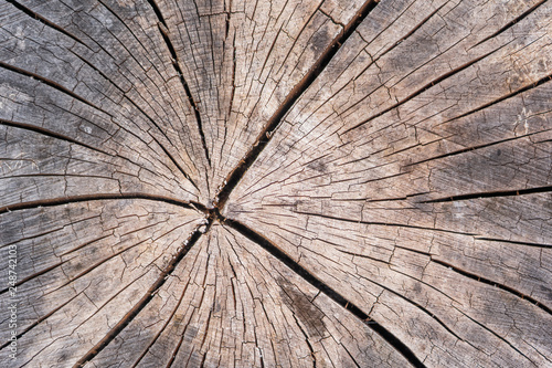 Wood Texture Of Cut Tree Trunk Close Up Detail Annual Rings