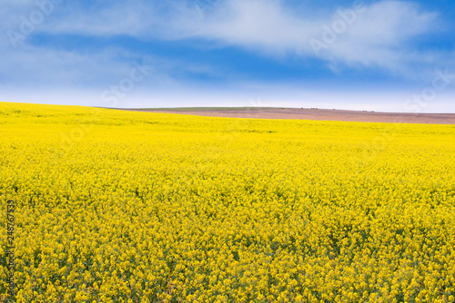 Foto op Aluminium Oranje Canola field in rural South Australia