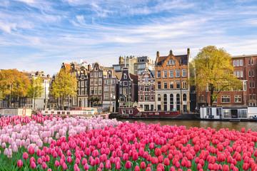 Amsterdam Nizozemska, nizozemska kuća grada uz obalu kanala s proljetnim cvijetom tulipana