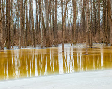 Winter Bare Trees Reflected In A Partially Frozen Yellow Tinted Forest Pond