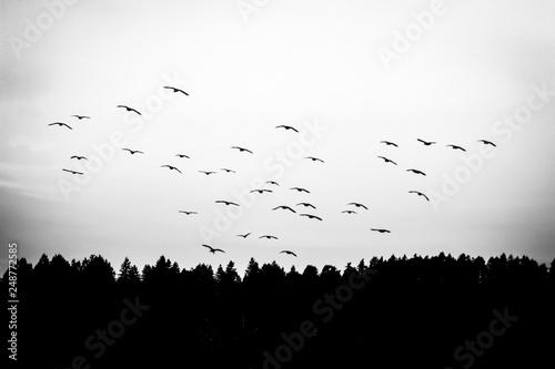 Fotografie, Obraz  Puget Sound Migration