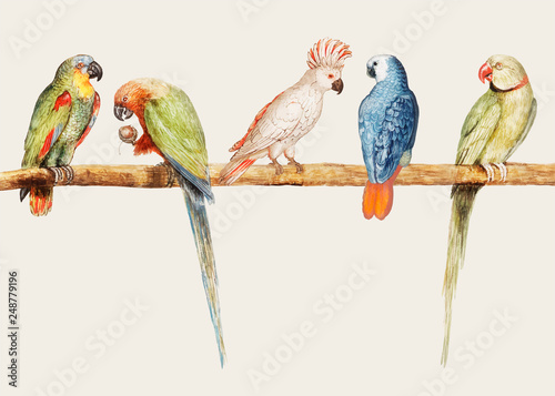 Tablou Canvas Parrot variety in vintage style