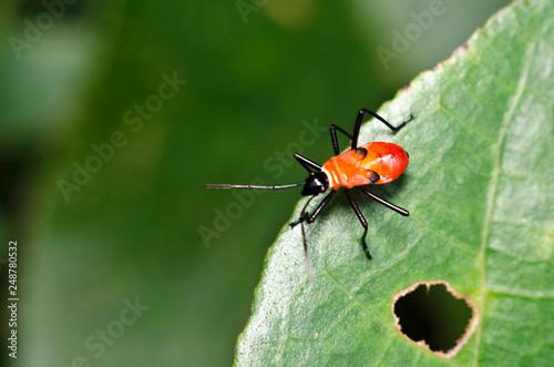 Fotografie, Obraz  Insect at Pasir Ris Park