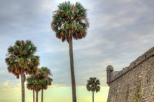 Castillo De San Marcos, St Augustine, Florida. A View Of The Wall And A Corner Tower. Also In The Shot Are Four Palm Trees And The Sunset Cloudy Sky.