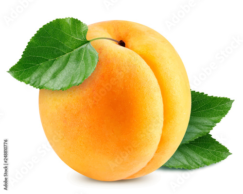 Apricot vector illustration Fototapeta